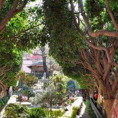 聯合花園用戶圖片