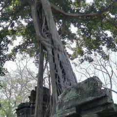 吳哥考古公園用戶圖片