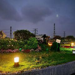 Sky Gardens User Photo