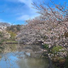 Tsurugaoka Hachimangu Shrine User Photo