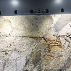 河南省地質博物館用戶圖片