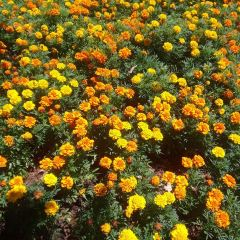 Dallas Arboretum and Botanical Gardens User Photo