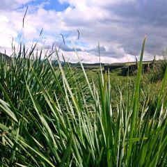 金銀灘草原用戶圖片