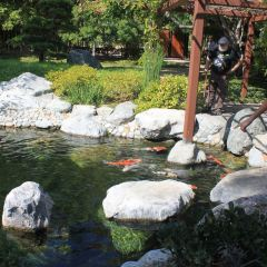 Japanese Friendship Garden User Photo