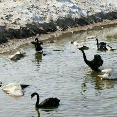 Huanghe Sanjiaozhou Zoo 여행 사진