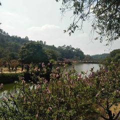 Nanguo Peach Garden User Photo