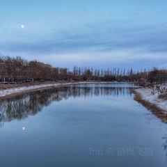 靈武西湖公園用戶圖片