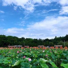Xindengzhen User Photo