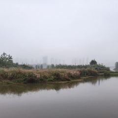 漢江濕地公園用戶圖片