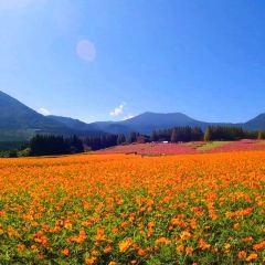 生駒高原のユーザー投稿写真