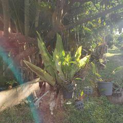 思蒂辣椒園用戶圖片