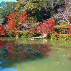御船山楽園のユーザー投稿写真
