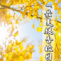Xinguangcun User Photo