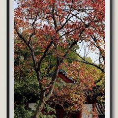 紅樓藝文苑用戶圖片