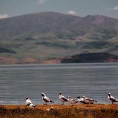 冬給措納湖用戶圖片