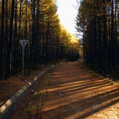 小興安嶺林區用戶圖片
