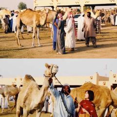 Al Ain Camel Market User Photo