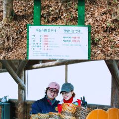 대관령양떼목장 여행 사진