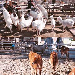 那須羊駝牧場用戶圖片