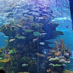 多彩貴州城極地海洋世界用戶圖片