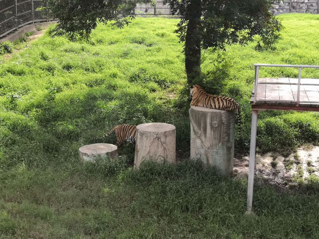 Yunhe Wan Forest Zoo