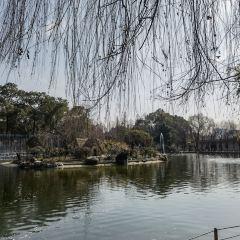청두 동물원(성도 동물원) 여행 사진