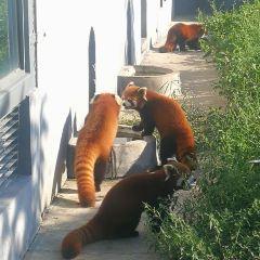 룽커우 동식물원 여행 사진
