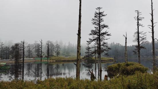 这是第三次来了,又遇到雨雾天气,又没翻看到桌山。没有乘坐缆车