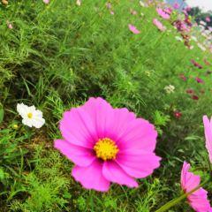 Weishui Scenic Area User Photo