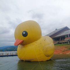 추이핑후 호수 여행 사진