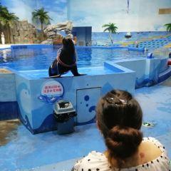 荊州小梅沙海洋館用戶圖片