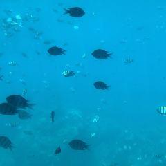 亞龍灣海底世界用戶圖片