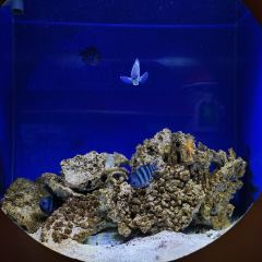 Oceanus Marine Park User Photo