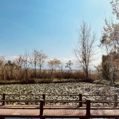 Qionghai National Wetland Park 여행 사진