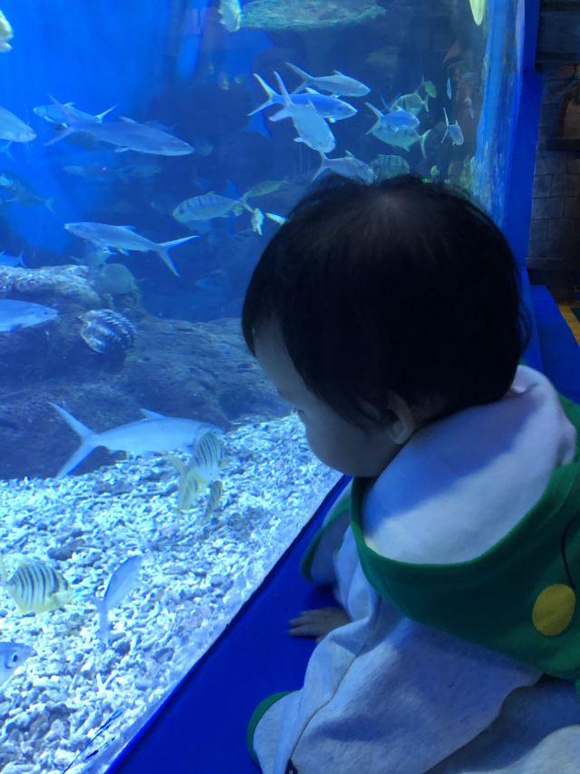 쿤밍 화두 하이양스제