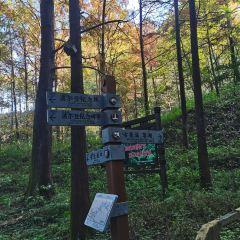 보얼덩산림공원 여행 사진