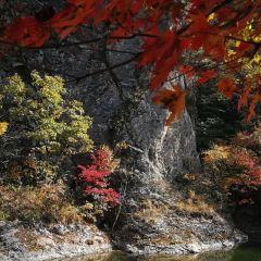 蒲石河森林公園用戶圖片