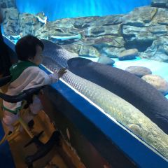 Kunming Huadu Ocean World User Photo