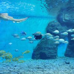 Quancheng Ocean and Polar World User Photo