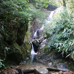 Ruoliao Primeval Forest User Photo
