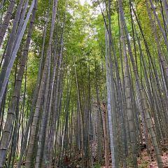 칭위안진쯔산 생태관광풍경구 여행 사진
