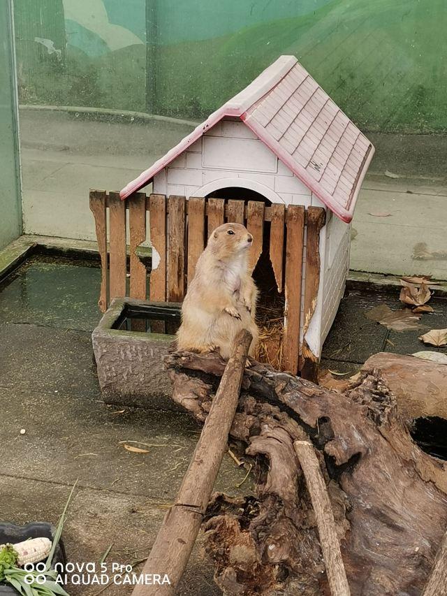 청두 동물원(성도 동물원)