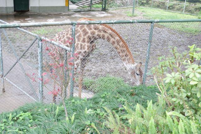 Wenzhou Zoo