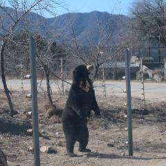 Badaling Wildlife World User Photo