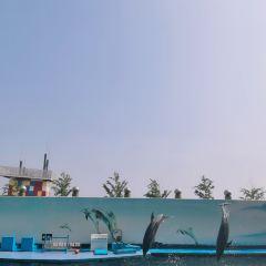 신아오하이디스제 해저세계 여행 사진