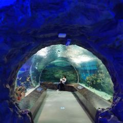 成都海昌極地海洋公園用戶圖片