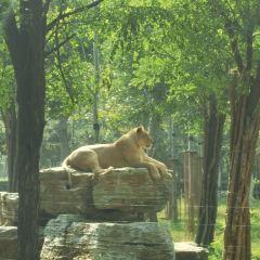 친황다오 야생동물원 여행 사진