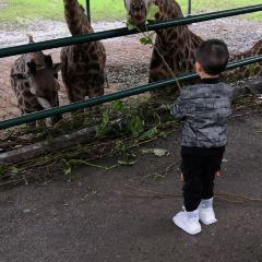 충칭 야생동물원 여행 사진