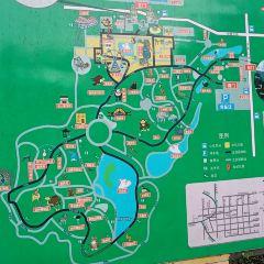 스자좡(석가장) 동물원 아쿠아리움 여행 사진