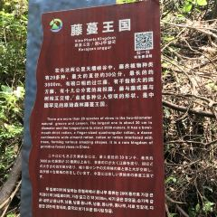 Daguishan National Forest Park User Photo